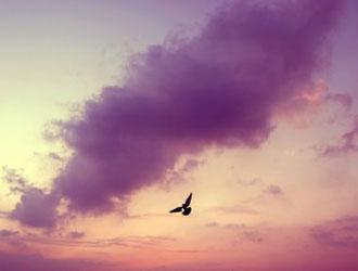 фото птица в небе